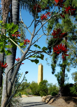 15 coral tree with obelisk resized